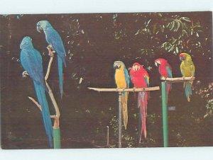 Pre-1980 JUNGLE GARDENS SCENE Sarasota Florida FL AF9294@