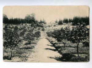 223248 GEORGIA Batumi tangerine garden Chakvinskoe estate old