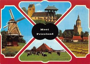Mooi Friesland Muhle Mill Kirche Church Cows