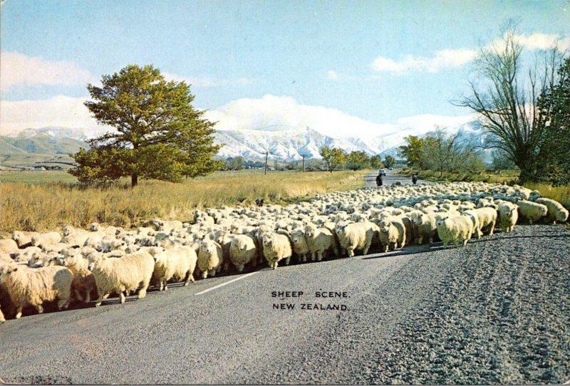 New Zealand Sheep Scene