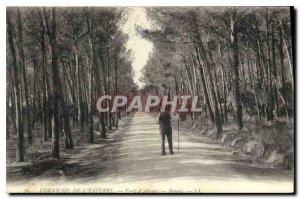 Old Postcard Corniche Esterel Forest Aigues Boumi