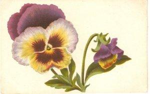 Beautiful flowers Nice old vintage Spanish postcard
