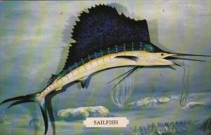 Fish The Sailfish