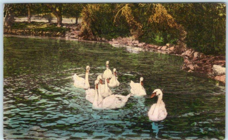 HOTEL DEL MONTE, California CA  Handcolored SWANS on Laguna del Rey  Postcard
