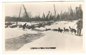 RP; Dog Team on a Yukon trail, Y.T. , Canada , 20-30s