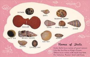 Names Of Sea Shells Treasures Of The Sea