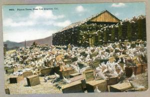 Pigeon Farm, Near Los Angeles, California unused Postcard