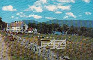 Longwood Dairy Farm Center Harbor New Hampshire