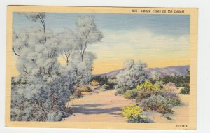 P2179 1940 postcard smoke trees on the desert mailed from calif