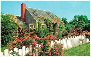 USA Typical Rose Covered Cottage Nantucket Massachusetts Vintage Postcard 07.52