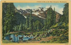 United States a band of elk in the High Olympics Washington
