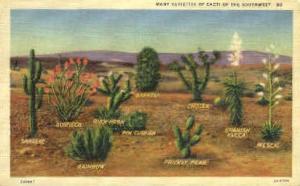 Many Varieties of Cacti Misc NM Unused