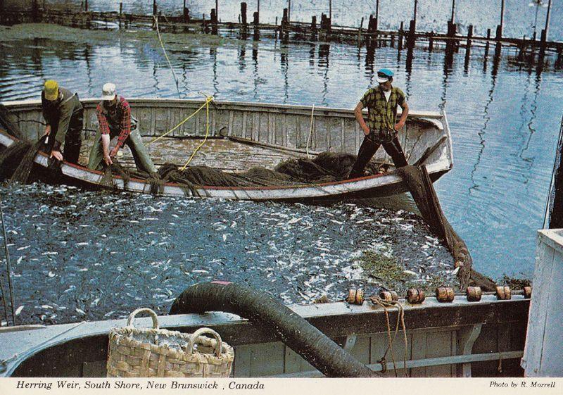Fishing at New Brunswick Canada Postcard