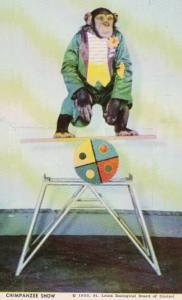 Missouri St Louis Chimpanzee Show St Louis Zoo