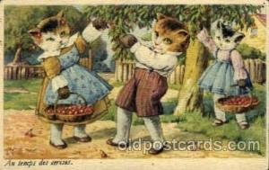 Cat Cats, Post Card, Post Card