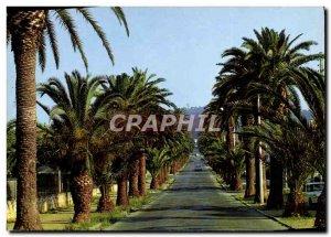 Modern Postcard Hyeres Les Palmiers Avenue Alexis Godillot
