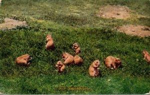 New York Zoological Park Praiirie Dogs