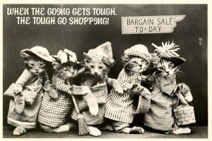 Humor - Dressed Kittens Born to Shop