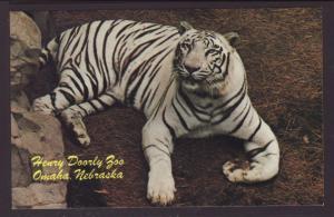 White Bengal Tiger,Henry Doorly Zoo,Omaha,NE