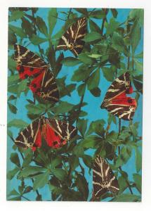 Butterfly Greece Valley of the Butterflies Rhodes Papillons Vtg Postcard 4X6