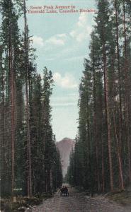 ALBERTA, Canada, 1900-1910´s; Snow Peak Avenue To Emerald Lake, Canadian Roc...