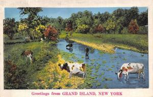 Grand Island NE Cows Graze In And Drink From A Stream~Linen Greetings 1940s