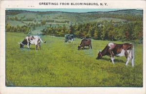 New York Greetings From Bloomingburg 1935