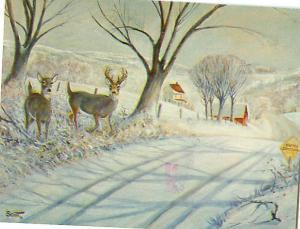Rural Countryside Painting Robert Scott Deer Buck And Doe  Postcard  # 7412
