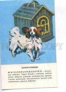 237245 papillon Dog by Glikman old russian card