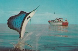 A Jumping Sailfish by Ozzie Sweet, 1940s to Present