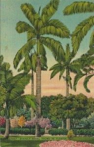 Postcard - FL - Florida Royal Palm Trees Linen Unposted