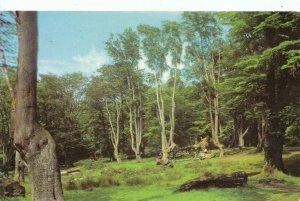 Essex Postcard - Epping Forest - Ref 12152A