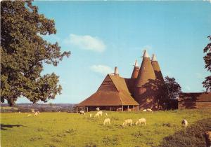 BT18014 oast houses sheep muton england   uk