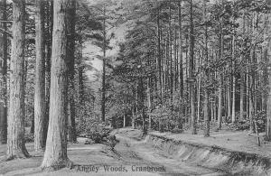 England Angley Woods, Cranbrook, Forest (Kent)
