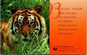 Washington DC World Wildlife Fund Bengal Tiger Postcard