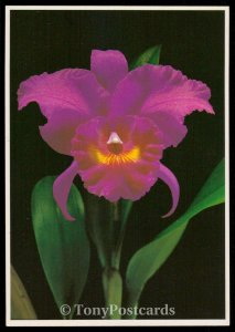 Beautiful flower of Tahiti: the orchid