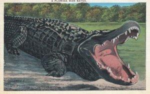 FLORIDA Alligator, 1936 ; A Florida Man Eater