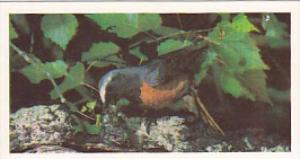Brooke Bond Vintage Trade Card Woodland Wildlife 1980 No 23 Redstart