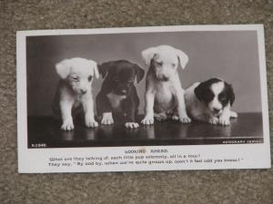 RPPC, Looking Ahead-4 Little Puppies, Unused Vintage Card, by Rotograph Co.