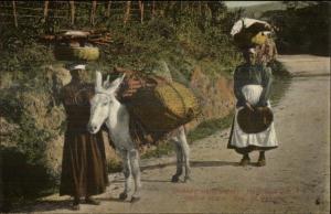 Panama - Native Women Carry Wood w/ Donkey c1910 Postcard