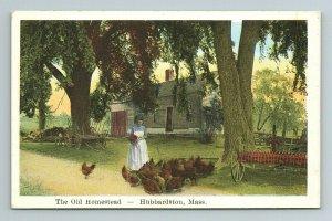 The Old Homestead Hubbardston Woman Feeding Chickens Mass Massachusetts Postcard