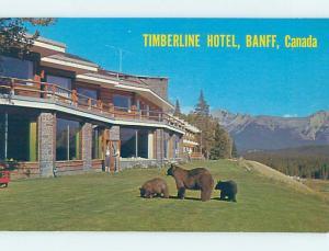 Unused Pre-1980 FRIENDLY BEARS AT TIMBERLINE HOTEL Banff Alberta AB B0875