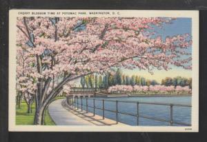 Cherry Blossoms,Potomac Park,Washington,DC Postcard