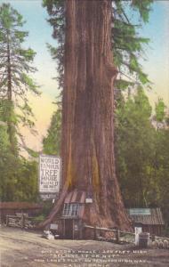World Famous Tree House Lane's Flat On Redwood Highway California Handcolored...