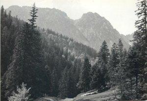 Postcard Poland Western Tatras Strazyska Valley