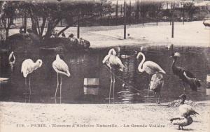 Museum d'Histoire Naturelle, La Grande Voliere, PARIS, France, 1900-1910s