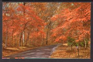 Autumn,Along the Shores of Lake Texoma BIN