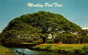 Hawaii Hawaiian Monkey Pod Tree