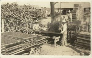 McFarland Kern County CA Agriculture Dipping Prunes Farmers Real Photo Postcard