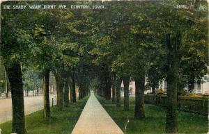 Clinton Iowa~Eight Avenue Shady Walk~Homes Under Trees~1908 Postcard